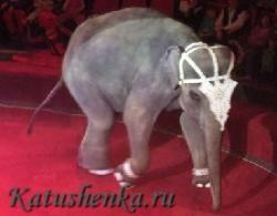 Тайна слонов-великанов